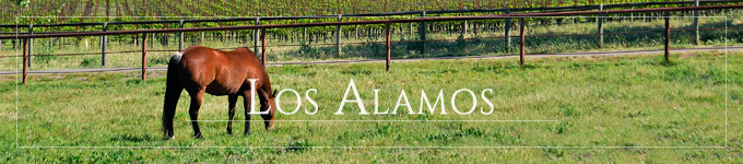 Los Alamos vineyards and horse